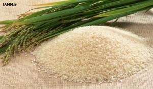 berenj_rice