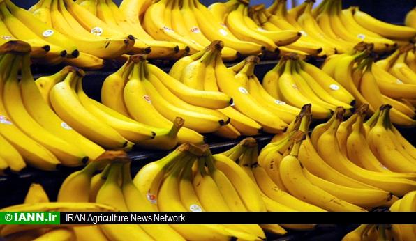 moj_mowj_Bananas