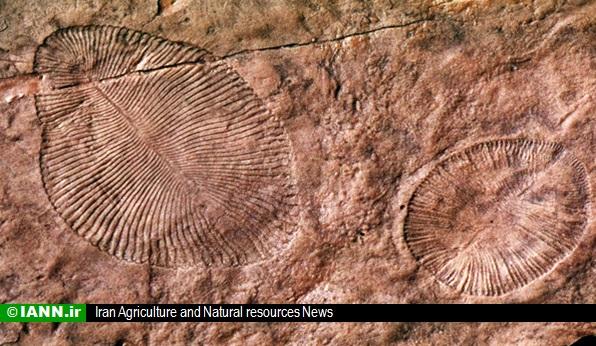fosil_barg_giyah_tarikh_giyahshenasi