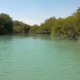 jangal_hara_mangro_darya