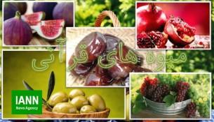 miveh_quran_ghoran