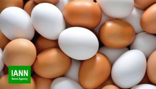 tokhmorgh_egg