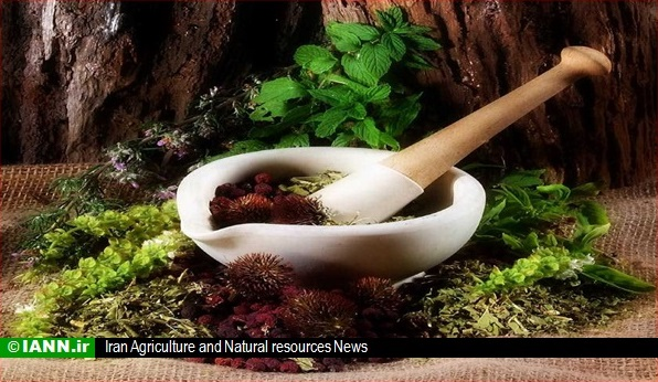 بیش از ۸ هزار گونه گیاهی در ایران شناسایی شد