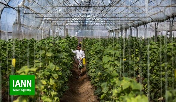 توسعه گلخانه ها مرهم تنش های آبی کشاورزی